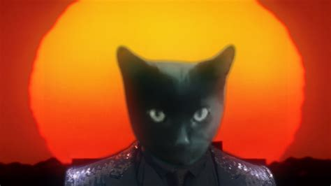 Cat Lucky, A Meow-Filled Cover of Daft Punk's 'Get Lucky'