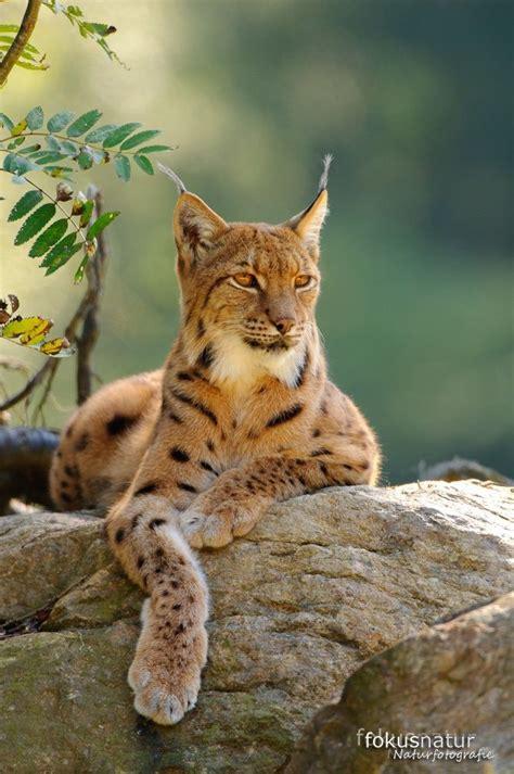 3341 Best Wildlife [animals] Images On Pinterest Wild