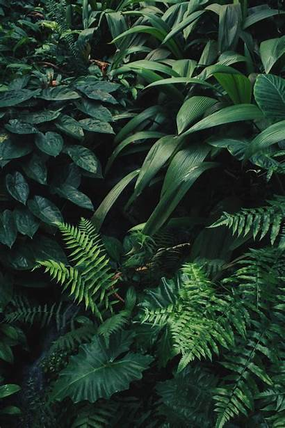 Aesthetic Pattern Plant Plants Leaves Nature Grounds