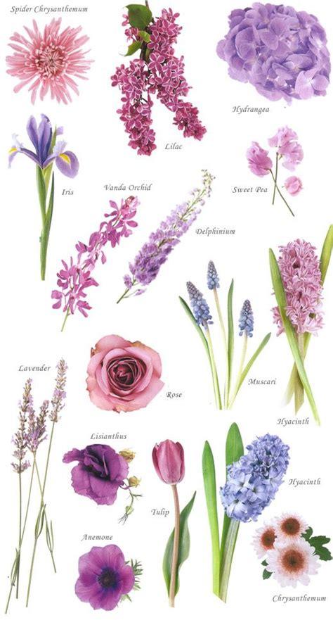 flowers names 25 best ideas about purple flower names on pinterest purple names flower chart and blue