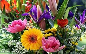 Blumen Im Frühling : fruehling blumen hintergrundbilder wallpaper kostenlos nanopics bilder ~ Orissabook.com Haus und Dekorationen