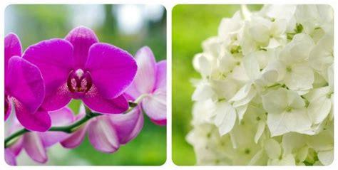 significato dei fiori ortensia significato dei fiori mamma felice