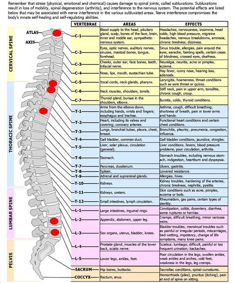 spinediagram spinal nerves effects chart good   spinal nerve varicose vein
