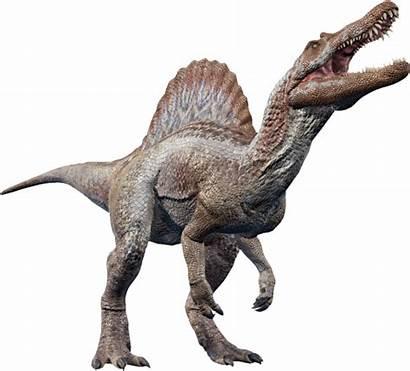 Spinosaurus Evolution Dinosaur Jurassic Wiki Fandom Park