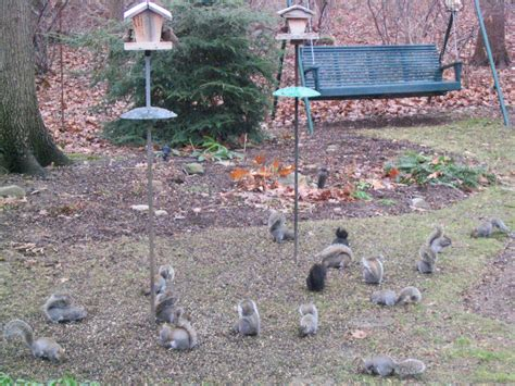 Let me know what works for you. How To Keep Squirrels And Raccoons Out Of Garden | Home Outdoor Decoration