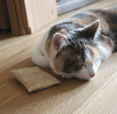 der kraeutergarten fuer katzen heilkraeuter und mehr