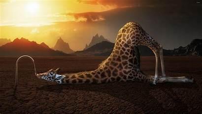 Wallpapers Humor Digital Animals Giraffes Drink Valhalla