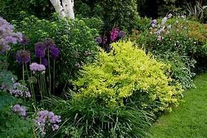 Arbuste Plein Soleil Longue Floraison : les vivaces arrosoirs et s cateurs ~ Premium-room.com Idées de Décoration
