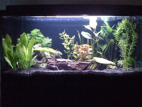 aquarium kies schwarz mein neues 54 l aquarium aquarium forum