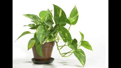 easy houseplants easy house plants low light youtube