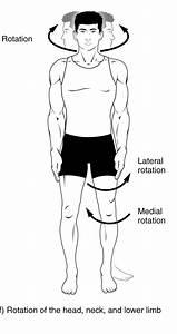 Rotation  Medizin   U2013 Wikipedia