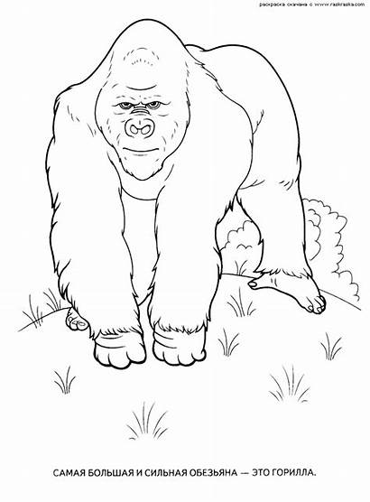Wild Coloring Animals Pages Animal Printable Getcoloringpages