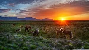 Download Wild Horses At Sunset Wallpaper 1920x1080 ...