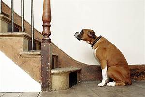Is Your Dog Afraid of Stairs?