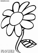 Flower Coloring Pages Petal Colorings Getdrawings Drawing sketch template