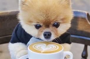 Jiffpom Coffee
