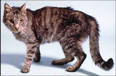lap  love veterinary hospice radioactive iodine