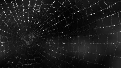 Spider Gifs Spiderweb Animated Anime Animation Spiders