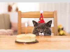 Happy Birthday Katzenet Gewinnspiel zum Geburtstag!