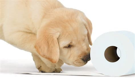 10 facts about the andrex puppy
