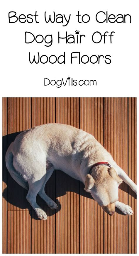 what is best way to clean hardwood floors the 25 best cleaning dog hair ideas on pinterest remove pet hair remove cat hair and pet