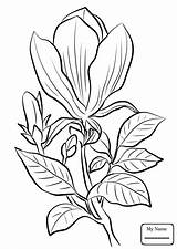 Magnolia Coloring Pages Tree Tattoo Watercolor Drawing Printable Awesome Flower Print Getcolorings Getdrawings Flo sketch template