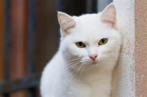 cat separation anxiety cat health separation anxiety in cats