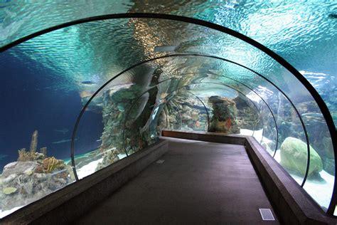 zoo nebraska underwater tunnel tunnels henry doorly ne shark possible way onlyinyourstate