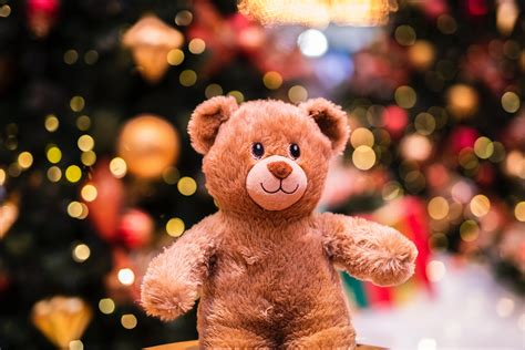 teddy bear hunt  education hub