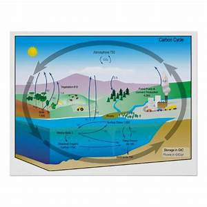Diagram Of The Biogeochemical Carbon Cycle Poster