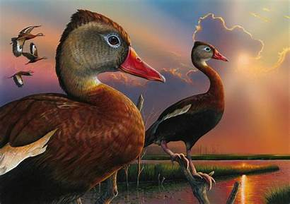 Duck Stamp Federal Whistling Bellied Contest Ducks