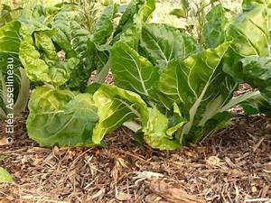 Comment Cultiver Des Champignons : les mycorhizes champignons et plantes s 39 associent pour le meilleur ~ Melissatoandfro.com Idées de Décoration