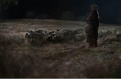 Field Shepherds Shepherd Night Sheep His Annunciation
