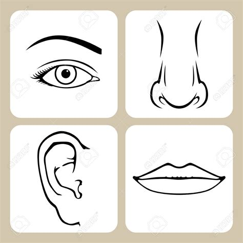 lips nose  eye clipart clipground