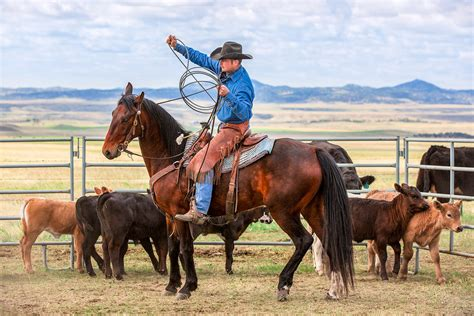 agriculture photography  todd klassy cowboys