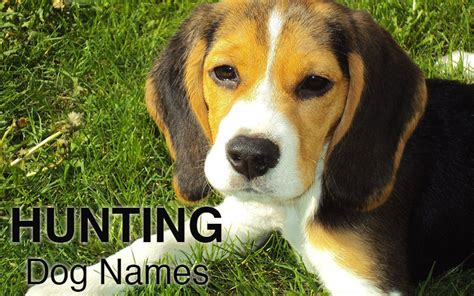Dog Names Great Ideas For Naming Your Puppy  The Happy