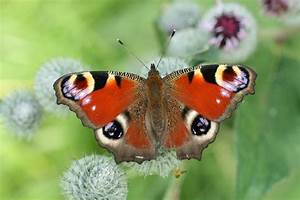 Beautiful Colorful Butterfly Pictures 1 Widescreen ...