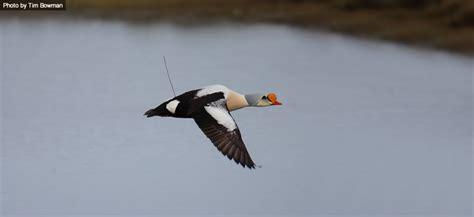 Sea Duck Joint Venture (SDJV)