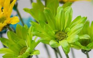 Green Flowers Pics