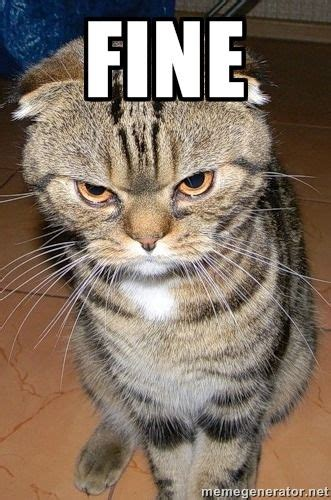 fine angry cat  meme generator cat memes angry cat