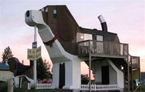 chien cuisine 8 constructions insolites