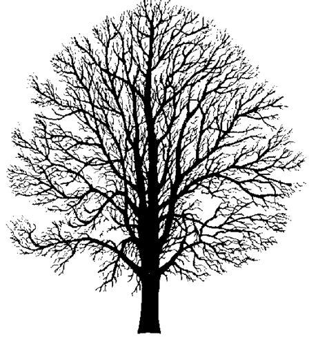 Hickory Tree Silhouette