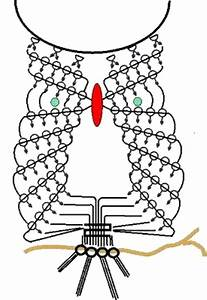 Knot Diagram Of The Macrame Owl In 2020