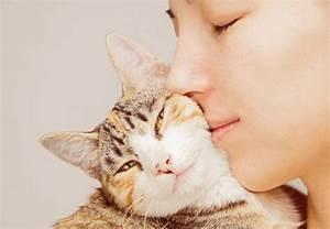 Comment Savoir Si Mon Ordinateur Est Surveillé : comment savoir si votre chatte est enceinte 6 tapes ~ Medecine-chirurgie-esthetiques.com Avis de Voitures