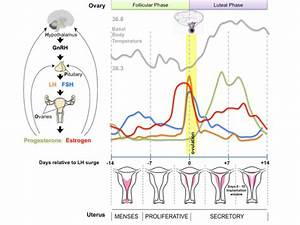 Bgdb Sexual Differentiation - Postnatal