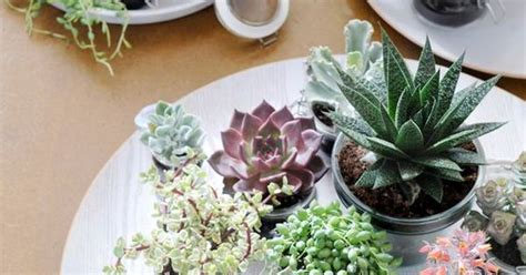 10 Most Common Types Of Succulents Houseplants That Are