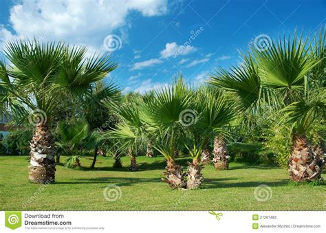 Beauty Palmtrees In Antalya Stock Image  Image Of. Best Car Shipping Companies Child Hip Pain. High Yield Online Savings Account. Mortgage Lenders Tulsa Drug Rehab In Colorado. Art Institute Graduate Programs. Air Conditioning Repair Gilbert Az. Jeep Ignition Switch Problems. Web Design Questionnaire Template. Travel Coverage Insurance My Promotional Pens