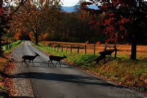 Cades Cove Great Smoky Mountains Fall