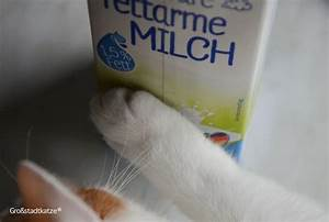Was Brauchen Katzen : katzenmythen katze nicht gegen den strich streicheln ~ Lizthompson.info Haus und Dekorationen