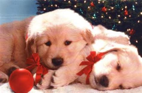 christmas backgrounds christmas puppy backgrounds